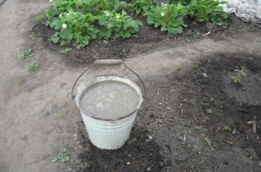 Как внести удобрения при посадке картофеля