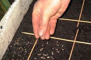 Как правильно сажать капусту на рассаду ⋆ Лайф совет